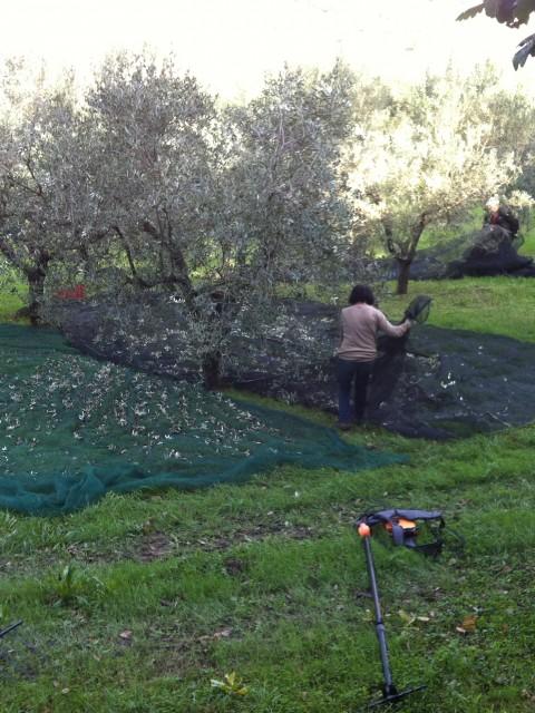 Colle Nobile, olio, Giorgio Tonti, olijfolie, San Marcello